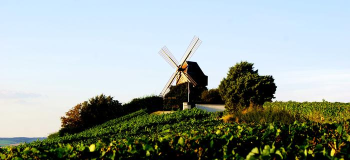 Posiadłość G.H. Mumm, Verzenay, Szampania, Francja (fot. Wojtek Wróbel)